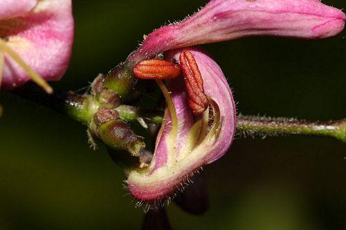 Este util să frământați miere cu vene varicoase